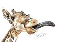 Portrait, Zeichnung, Giraffe, Tiere