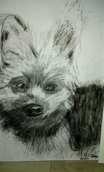 Tiere, Hund, Rocky, Zeichnungen