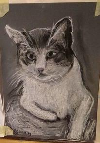 Katze, Prinz, Zeichnungen