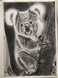 Bär, Bleistiftzeichnung, Koala, Zeichnungen