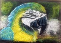 Kreide, Papagei, Malerei,