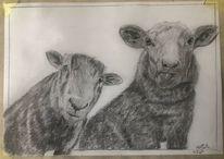 Markant, Schaf, Gesicht, Zeichnungen