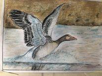 Wildgans, Teich, Landung, Malerei