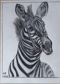 Zebra, Bleistiftzeichnung, Tiere, Zeichnungen