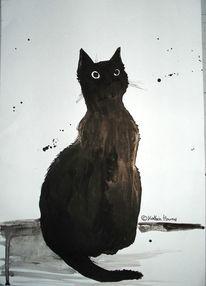 Kater, Katze, Schwarz, Weiß