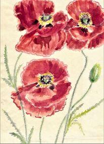 Mohnblumen, Martha krug, Aquarellmalerei, Aquarell