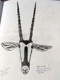 Bleistiftzeichnung, Tiere, Gemsbok, Zeichnungen
