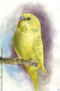 Papagei, Budgerigars, Gemälde, Haustier