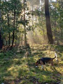 Licht, Heute morgen, Traumhaft, Hund
