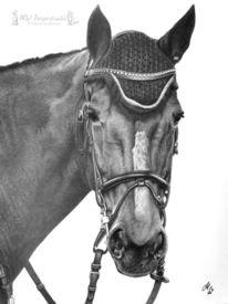 Pferde, Bleistiftzeichnung, Zeichnung, Zeichnungen