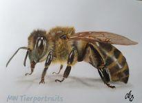 Insekten, Polychromos, Zeichnung, Biene