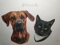 Katze, Polychromos, Zeichnung, Hund