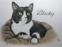 Katze, Polychromos, Buntstiftzeichnung, Zeichnung