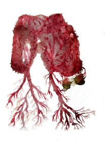 Zelle, Gehirn, Aquarellmalerei, Aquarell