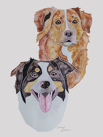 Australian shepherd, Retriever, Hundeportrait, Nach fotovorlage