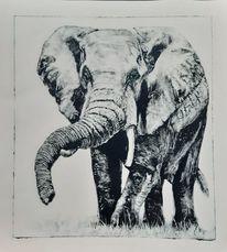 Monotypie, Elefant, Afrika, Zeichnungen