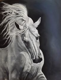 Pastellmalerei, Schimmel, Pferde, Zeichnungen