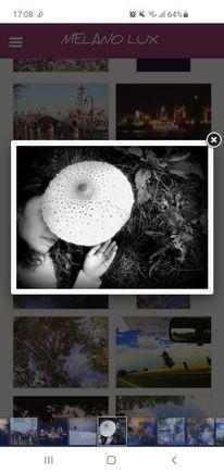 Wunderland, Pilze, Pinnwand