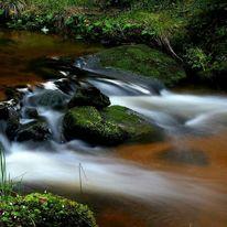 Bach, Wasser, Stein, Wald