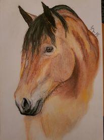 Tiere, Zeichnung, Buntstiftzeichnung, Pferde