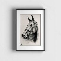 Pferde, Tierportrait, Sketchus, Zeichnungen