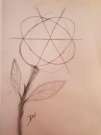 Bleistiftzeichnung, Skizze, Blumen, Zeichnungen