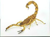 Giftig, Tierkreiszeichen, Insekten, Zange