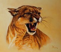 Amerika, Tierwelt, Puma, Ölmalerei
