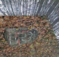 Wlde, Wald, Welt, Fotografie
