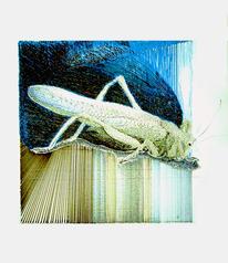 Heuschrecke, Tiere, Insekten, Zeichnungen