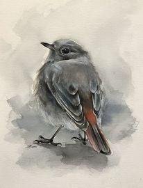 Vogel, Natur, Aquarellmalerei, Mischtechnik