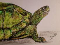 Schildkröte, Pastellmalerei, Acrylmalerei, Malerei