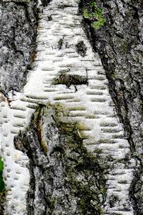 Irreal, Baum, Klimawandel, Augen