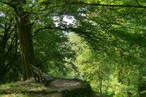 Baum, Arboretum, Licht, Grün