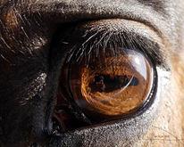 Pferde, Augen, Spiegelung, Licht