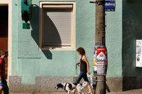 Schatten, Bewegung, Tiere, Fassade