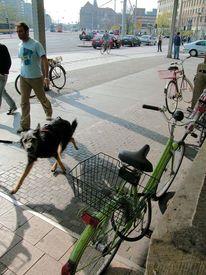 Straßenfotografie, Menschen, Schappschuss, Tiere