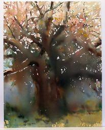 Savanne, Baum, Kenia, Licht