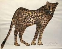 Gepard, Afrika, Savanne, Kenia
