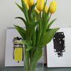 Fotografie, Tulpen, Grün, Gelb schwarz