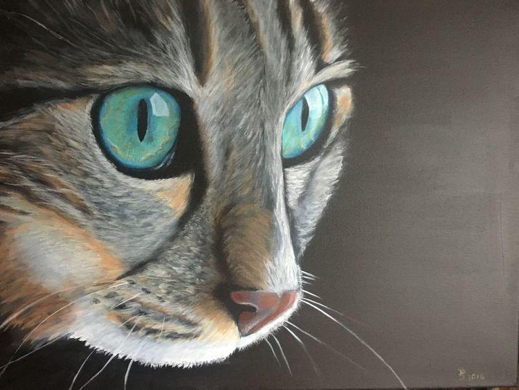 Augen, Vierbeiner, Katze, Haustier, Fell, Tiere