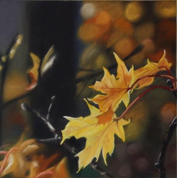 Laub, Orange, Sonne, Licht, Blätter, Leuchten