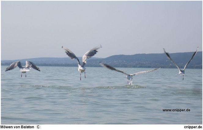 Wolkenschön, Balaton, Vogelflug, Blau, Vogel, Wasser