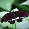 Schmetterling, Deutschland, Tiere, Insekten