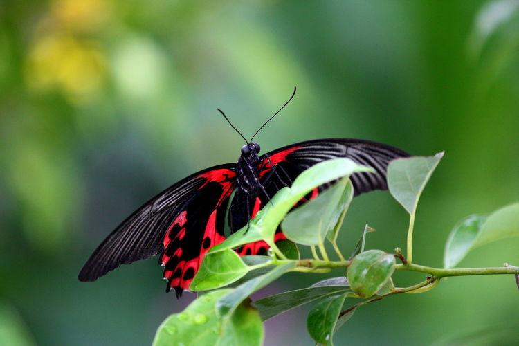 Sommer, Blätter, Deutschland, Insekten, Natur, Schmetterling