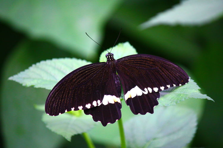 Schmetterling, Deutschland, Tiere, Insekten, Blüte, Libelle