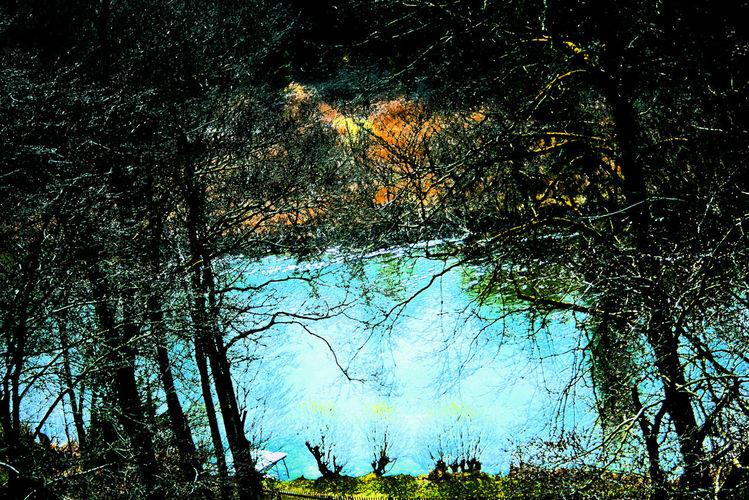 Pflanzen, Wasser, Ufer, Wald, Baum, Busch