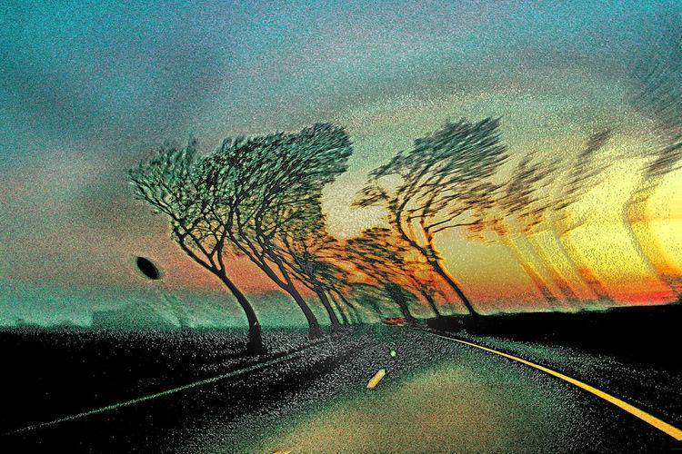 Zweig, Wolken, Straßenmarkierung, Straße, Licht, Blätter