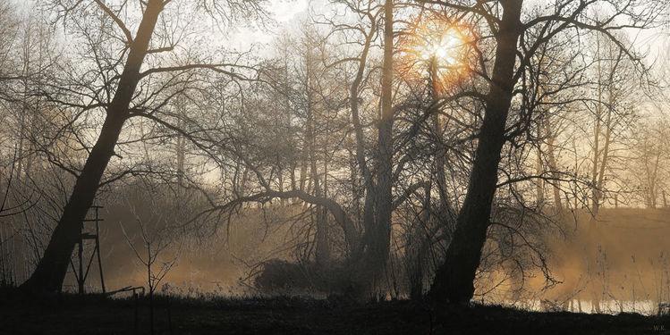 Pflanzen, Sonne, Vogel, Baum, Nebel, Früh