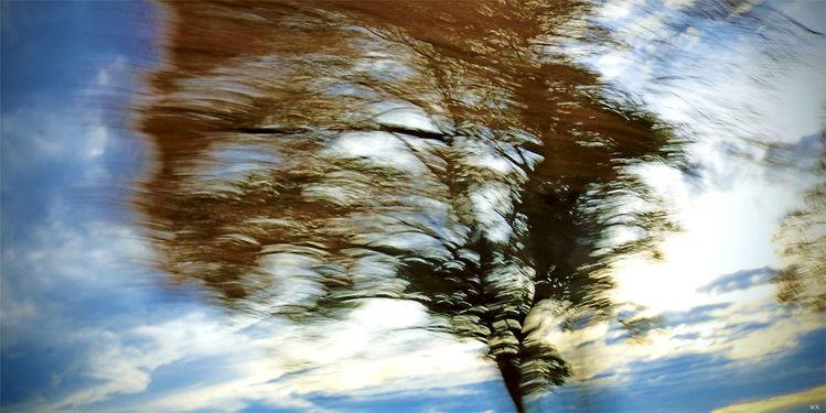 Vorbeifahren, Zweig, Himmel, Wind, Blätter, Licht